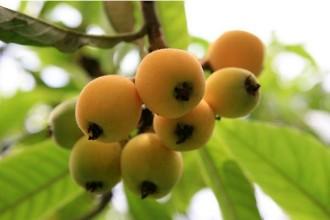 水果也要应季吃,吃对了才叫健康!你知道春季应吃哪些水果吗