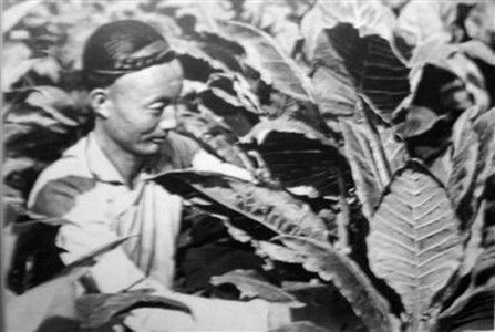 明清两朝禁烟令再严酷为何仍然屡次失败?